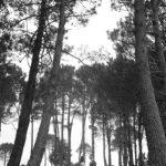 Matarangi-photographers-Coromandel159